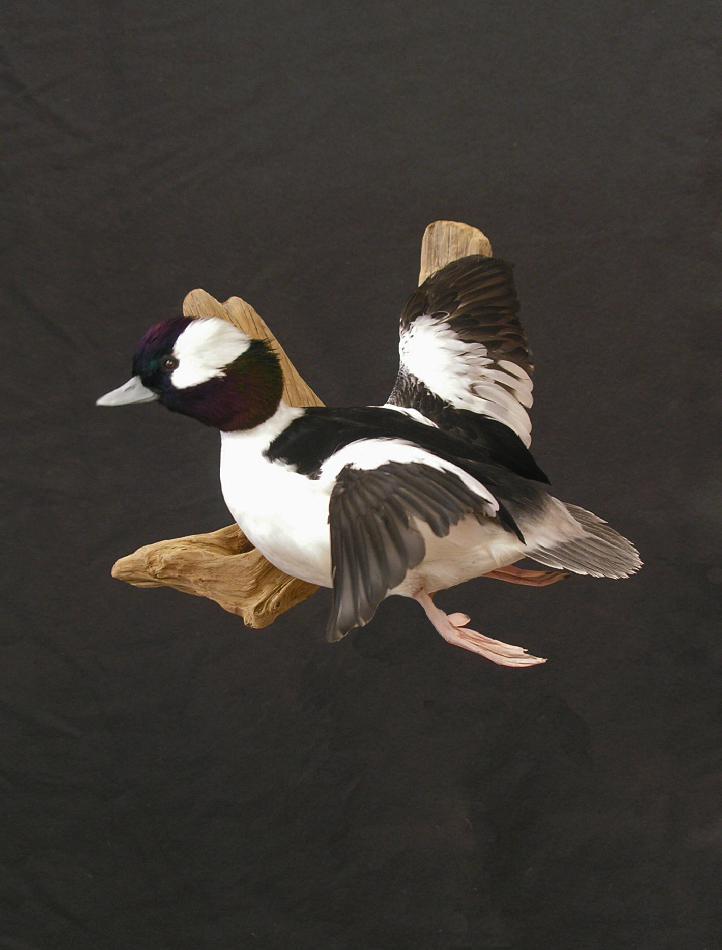 Two Rivers Taxidermy M...